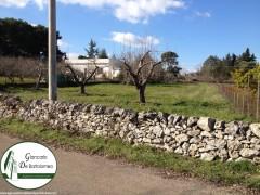 Martina Franca - Terreno agricolo di forma regolare